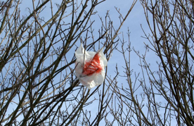 Charging shoppers could rid Jesmond of plastic bag litter